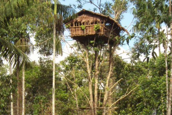 Rumah Pohon Papua